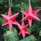 Sirius Stjerne Mini, rød, 3 stk.